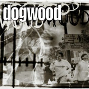 dogwood - more than conquerors